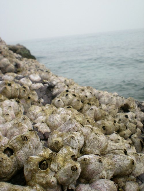 shellsandsea