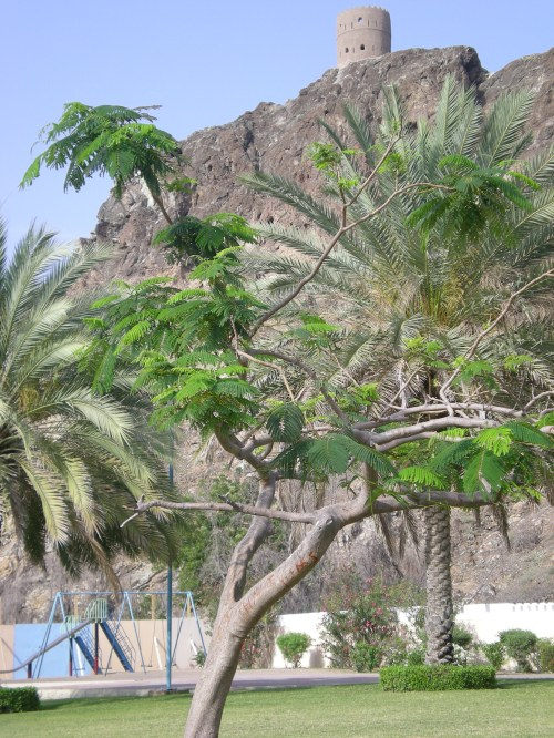 fort and trees at Kalbooh