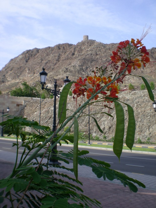 flowers at Muscat Gate