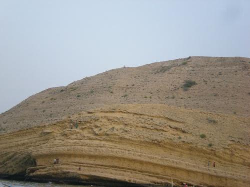ants on rock