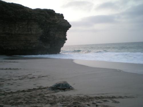 crawling to sea