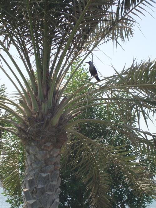 bird at quriyat