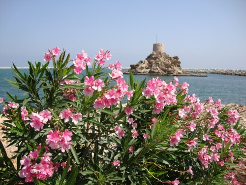 flowers and fort