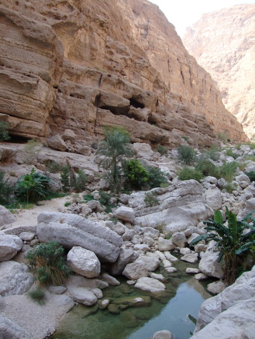 wadi shab beauty