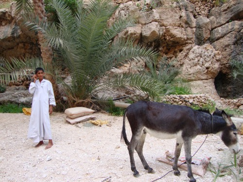 omani boy and donkey
