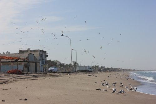 birds on beach looking north