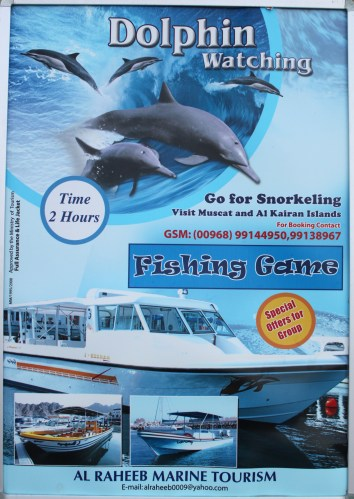 poster for dolphin watching