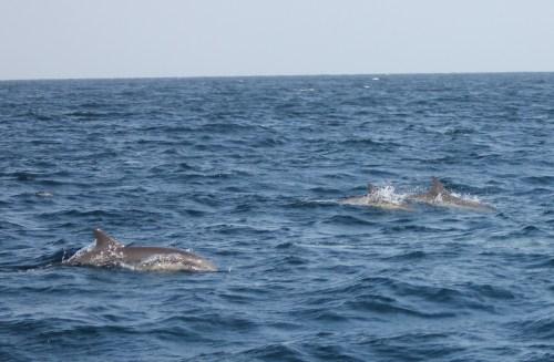dolphins ahoy