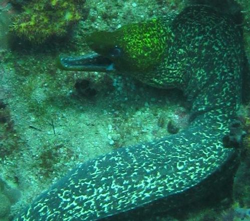 Aquarium pic 16 closeup