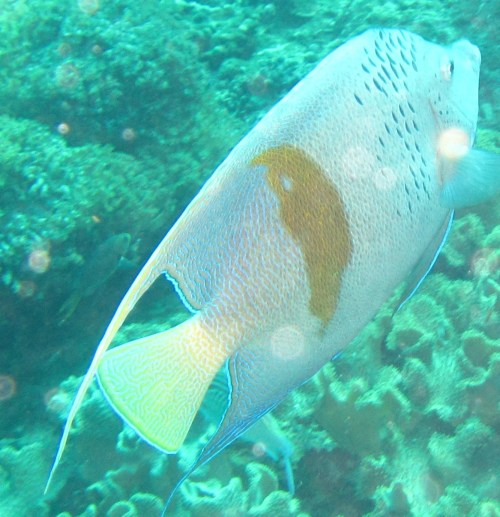close shot white and yellow fish