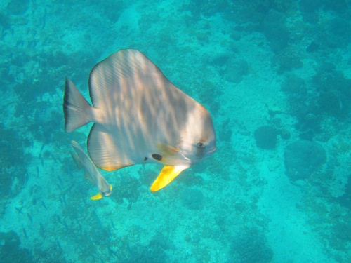 Aquarium pic 3