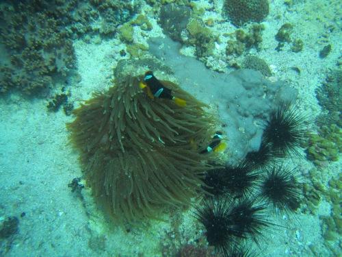 Aquarium pic 7