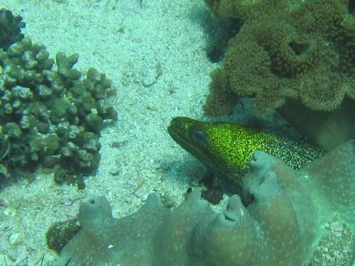 Aquarium pic 8