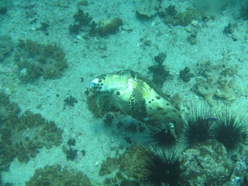 Aquarium pic 9
