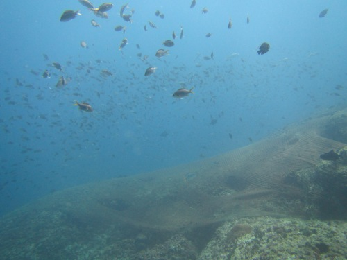 Aquarium pic 10