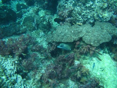 Aquarium pic 15