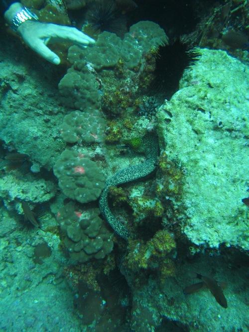 Aquarium pic 16