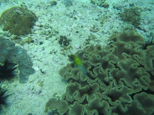Aquarium pic 18